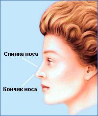 Идеальная проекция кончика носа на 1-2 мм выше проекции спинки носа